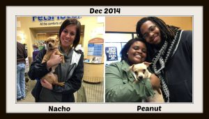 peanut and nacho dec 2014 pm